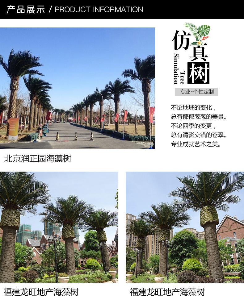棕榈树1_01.jpg