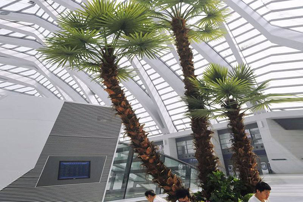 室内仿真棕榈树造景