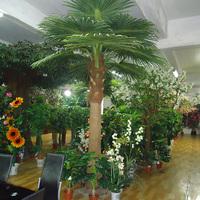 室内仿真扇葵树