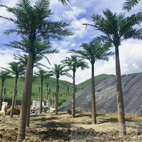 室外仿真大王椰子树