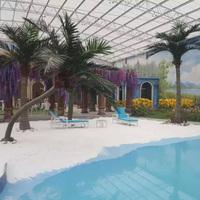室内游泳池弯杆椰子树