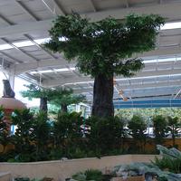 福州水乐园榕树室内造景