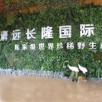 长隆国际植物墙