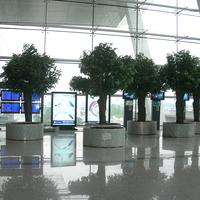 机场仿真榕树盆景