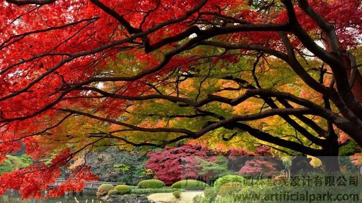 中国红枫.jpg
