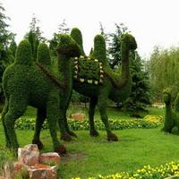 仿真绿雕骆驼