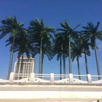 盐城滨海月亮湾仿真椰子树