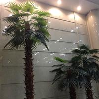 泰州万达广场保鲜仿真椰子树02