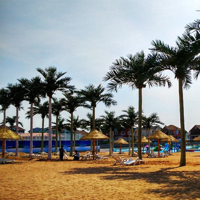 润正园仿真椰子树案例图片