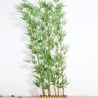 2米熏蒸凤凰竹