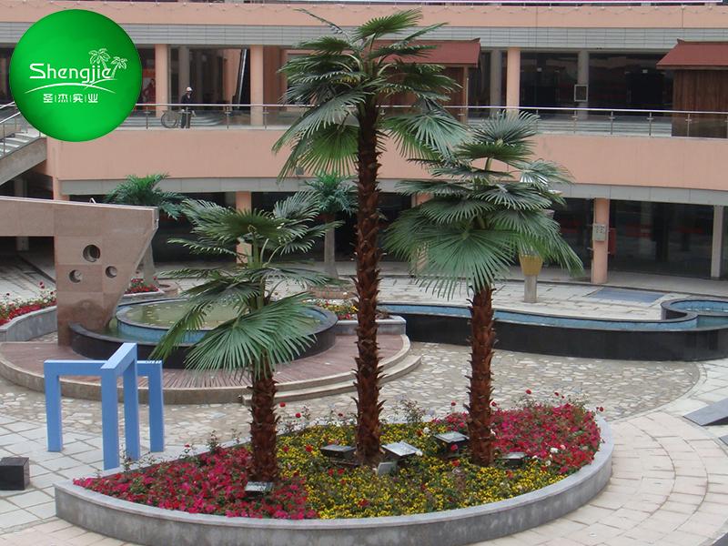 商场棕榈树