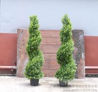 蛇形米兰树,米兰盆景