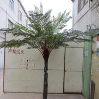 杆高190CM12叶桫椤树