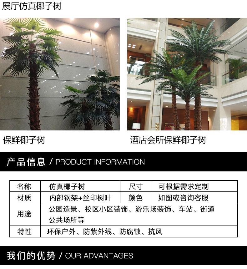 椰子树-3_02.jpg