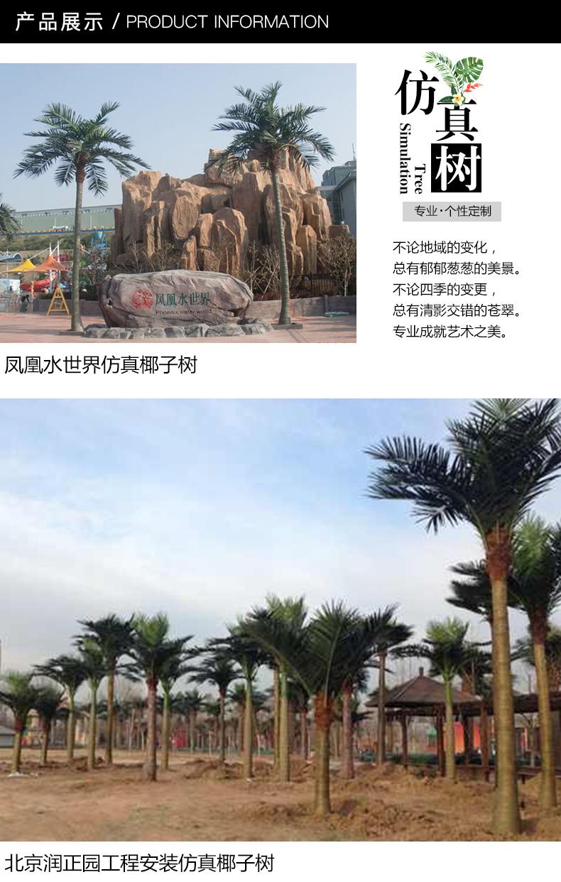 椰子树-2_01.jpg