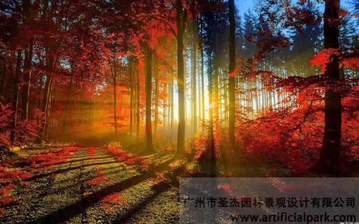 片植红枫.jpg