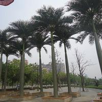 安徽芜湖尚客快捷酒店仿真大王椰