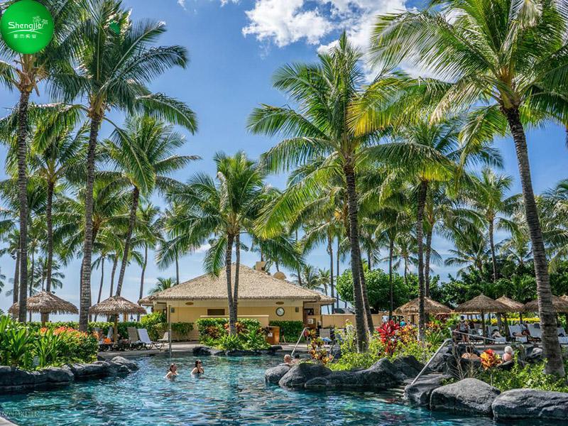 度假区仿真椰子树造景