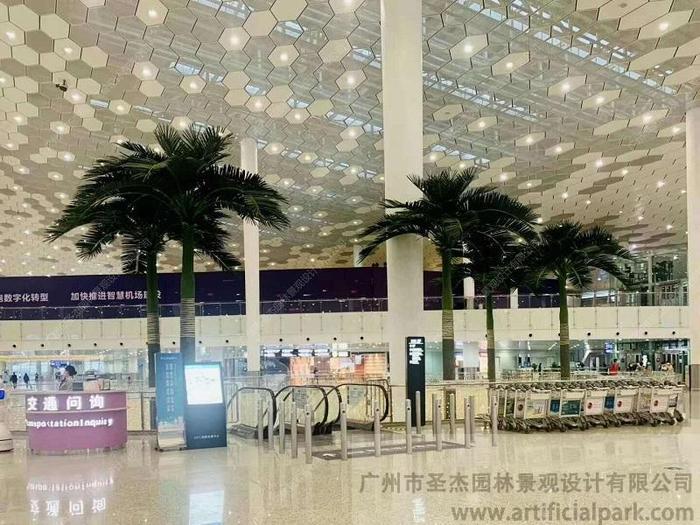 深圳宝安区机场大王椰子树.jpg