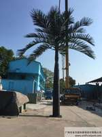 新款大王椰子树