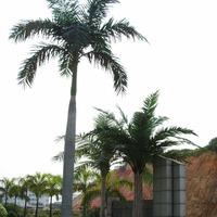 润正庄园仿真大王椰子