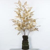 蕨草树(发财树)