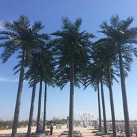 10米仿真大王椰子树