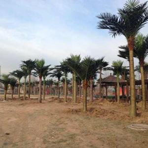 北京润正庄园室外仿真椰子树