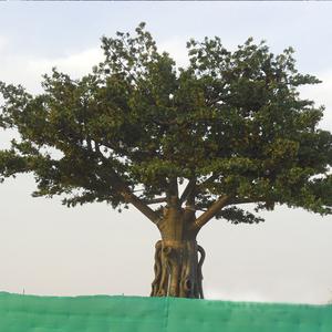 迪拜工程仿真榕树图