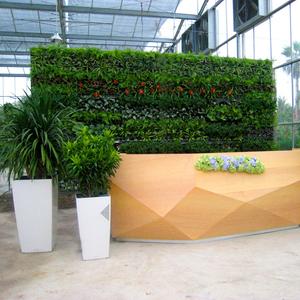 前台接待处植物墙装饰