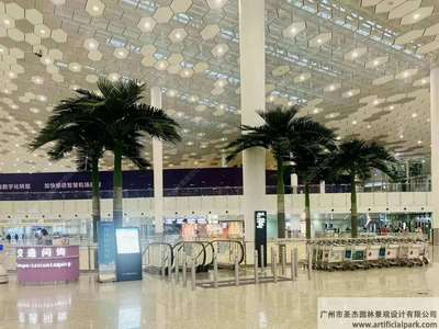 深圳宝安机场大王椰子树