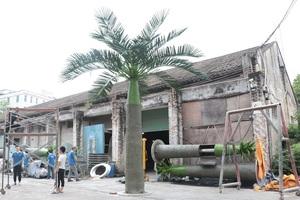基站大王椰子树