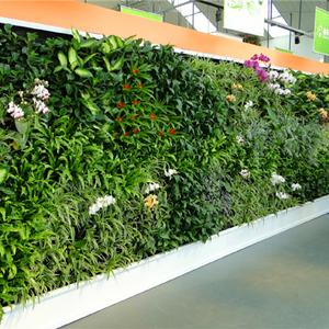户外墙壁外镶植物墙