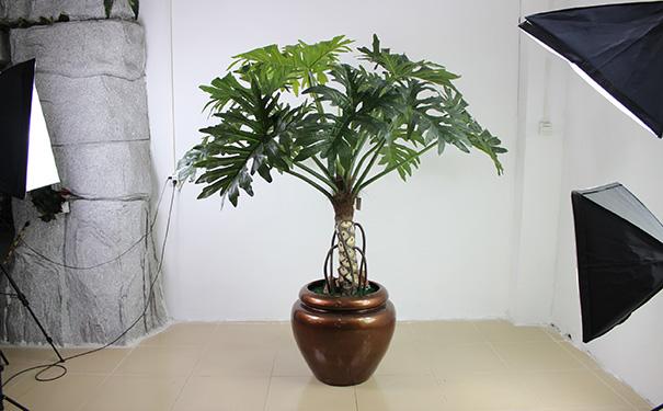 仿真植物.jpg
