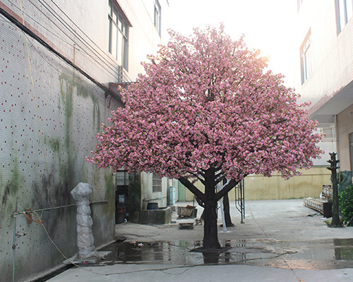 车间外樱花树