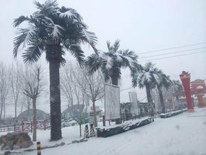 北京七夕婚纱基地仿真大树造景