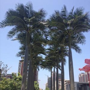 安徽芜湖工程仿真大王椰树